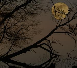 full-moon-1967289_1920