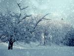 winter-1861704_1920